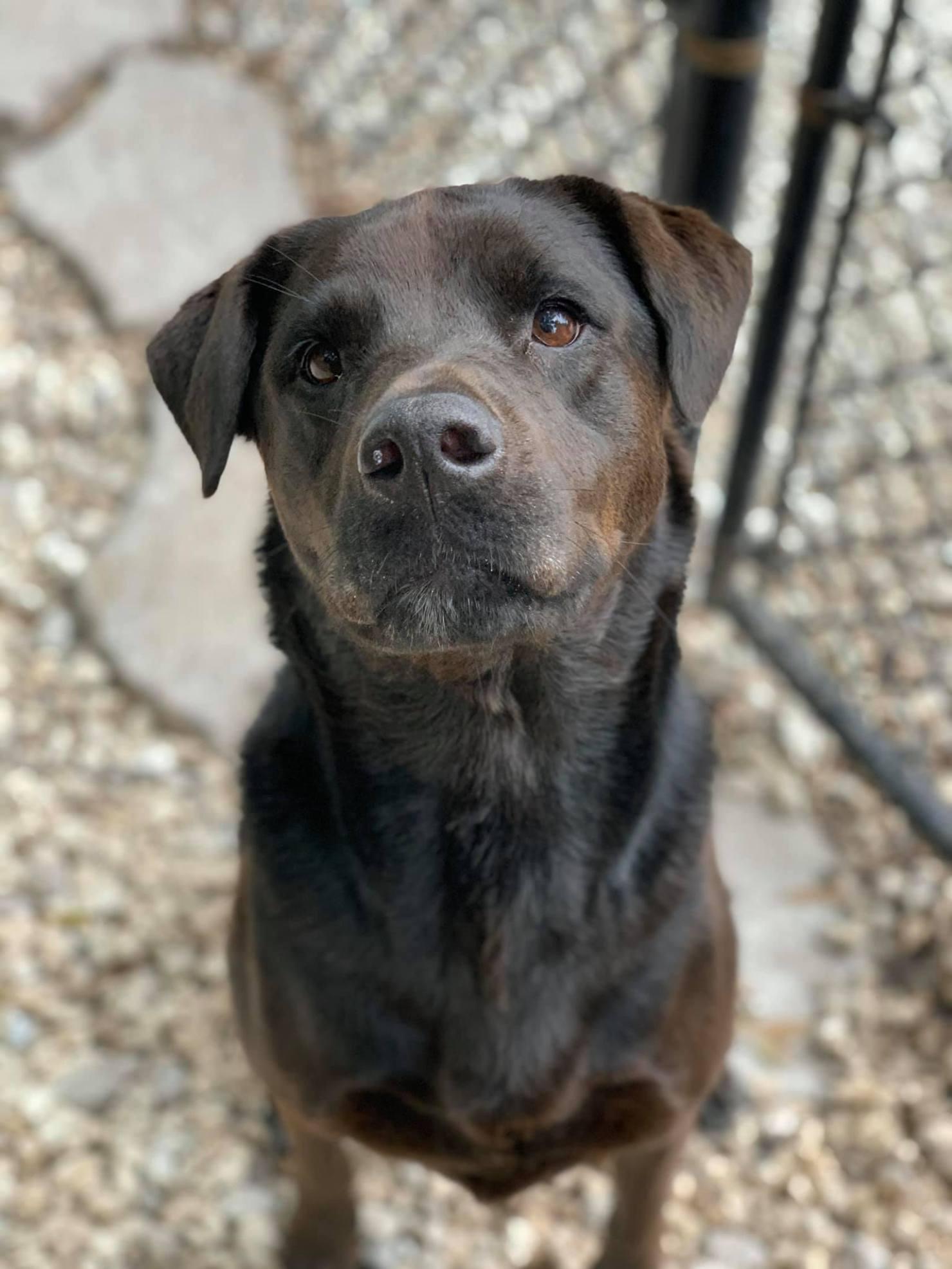 Professional Dog Training Success Story   Dixie