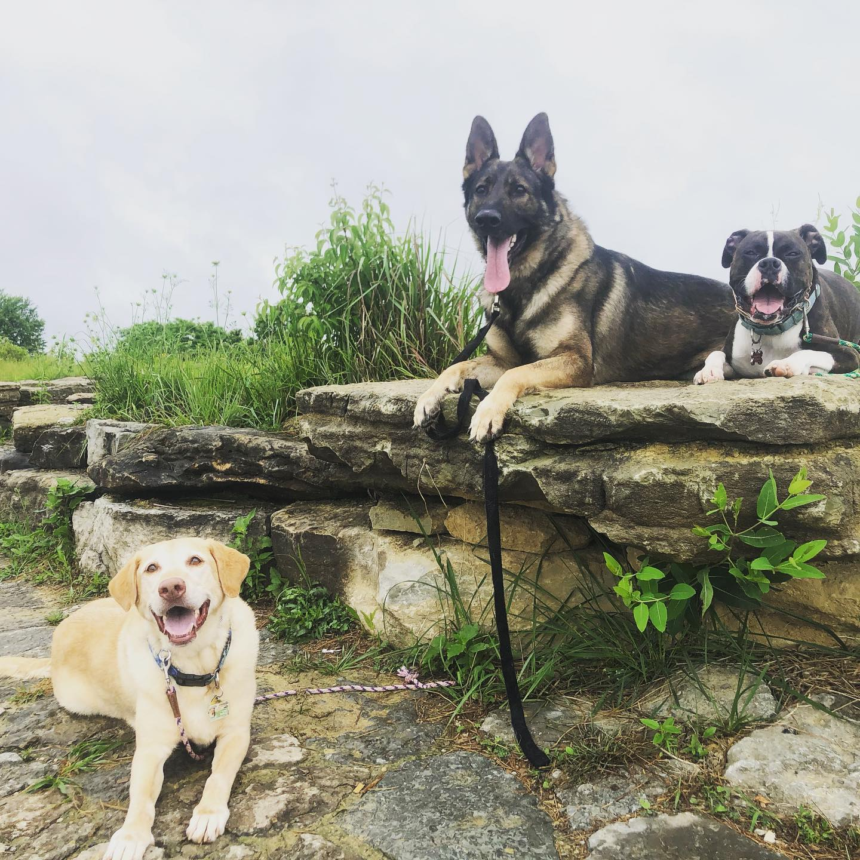 the parklands dogs